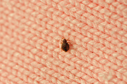 bed bug on clothing